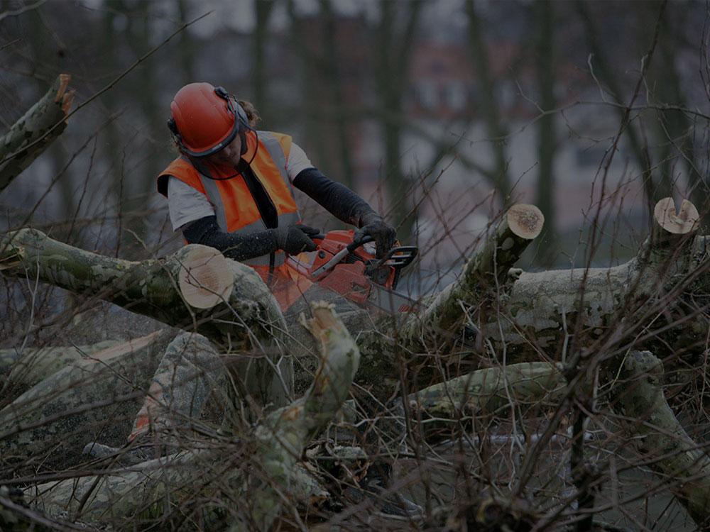 Homosassa Tree Service